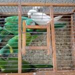 Сербская таможня предотвращает попытку контрабанды видов, находящихся под угрозой исчезновения