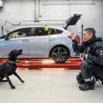 Norwegian TV Series on Customs Goes on with Season 2